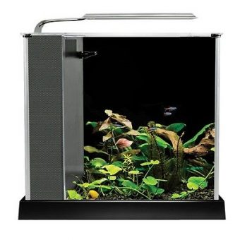 Glass Desktop Aquarium